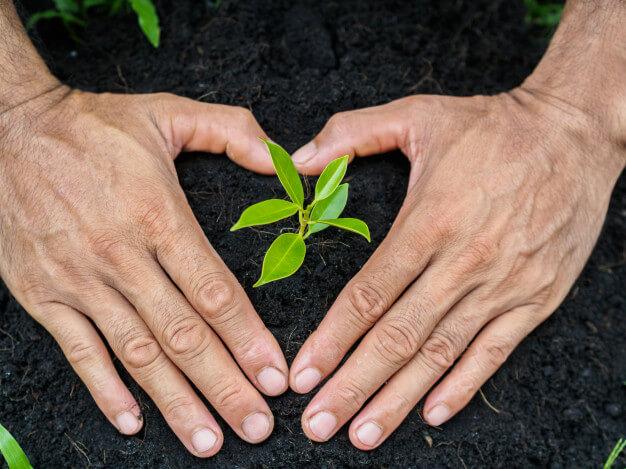 Aprenderás todo sobre la problemática de la Cultura Ambiental.